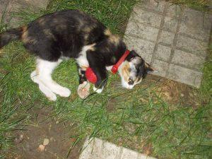 Cleo, o pisicuță curioasă de Holly Webb-Litera Mică