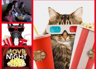 5 filme relaxante pentru timpul liber