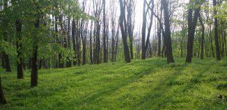 Greenery și niște mierle - Întâmplări adevărate - Literaturapetocuri.ro