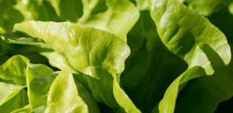 Ciorbă de măcriş, mâncare de salată verde, salată de fructe cu mentă