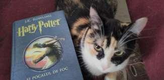 Harry Potter și Pocalul de Foc - J.K. Rowling