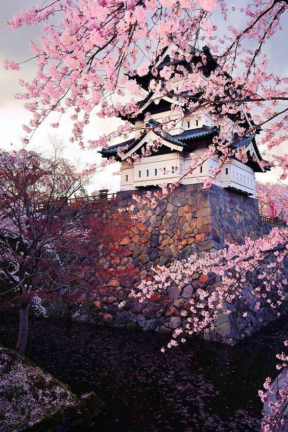 Japonia-Obiceiuri şi tradiţii
