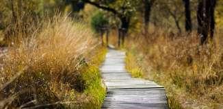 Dorinţe ascunse & Repere - Duel poetic - Creație literară