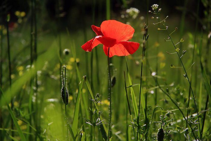 duel poetic prin iarba rece