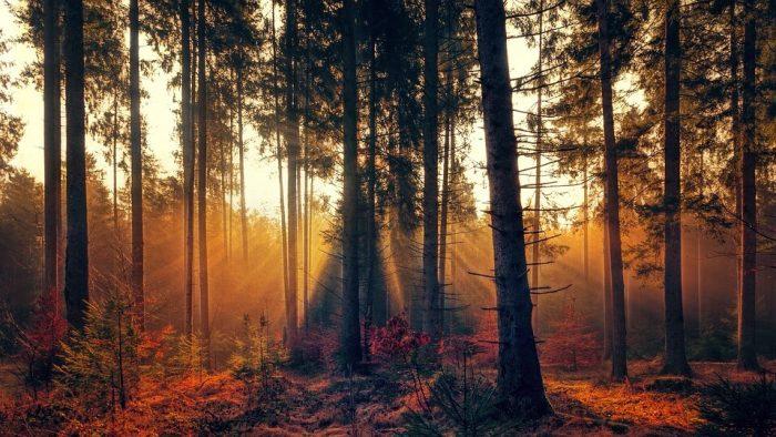 Duel poetic: Răvaș de toamnă & Toamna mea de-acum