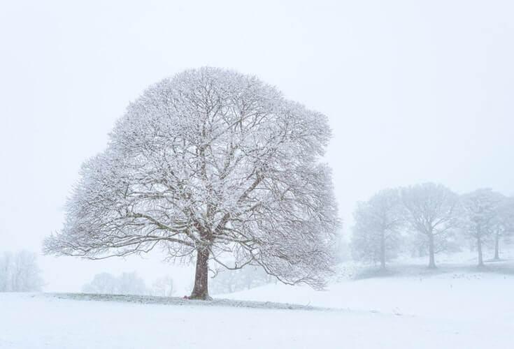 Întâia zăpadă din acel an - Raluca Butnariu