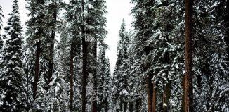 A fost odată iarna ...de Dan Ioan Panţoiu