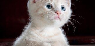 Colecţie de poezii - Un zâmbet - Pisicile albastre