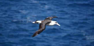 O inspiraţie divină - Sonet în zbor de albatross