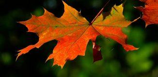 S-a pierdut o frunză-n noapte - Versul toamnei - poezii