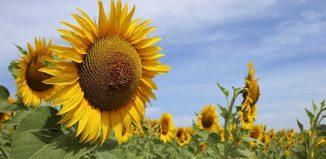 În vara mea - Din dorul inimii - Elena Moisei - Daniel Dac - poezii