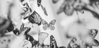 Constelaţia fluturilor albi de Lucian Ciuchiţă