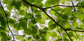 Căderi de frunze în așteptare -